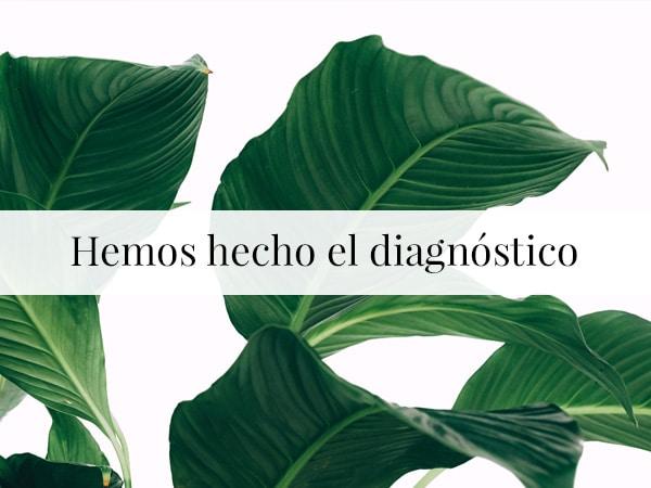 Nosotras hemos hecho el diagnóstico - Julio 2019